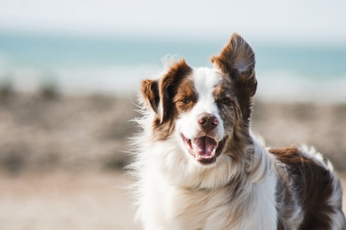 Reasons Why You Should Take Your Furry Friends to A Dog Day-care Centre